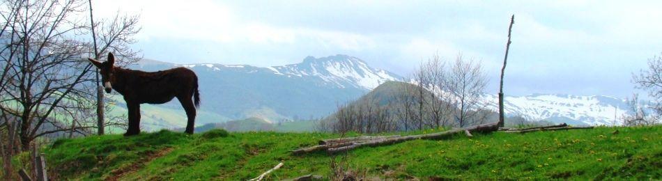promenade en âne en Auvergne