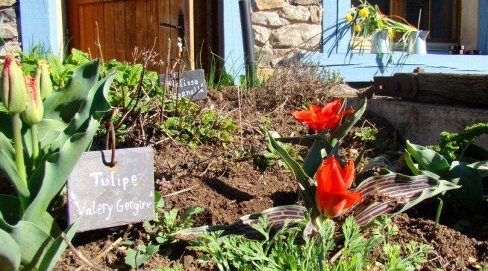 Chambres et Table d'hôtes fleuries à Blesle avec jardin , Haute-Loire en Auvergne