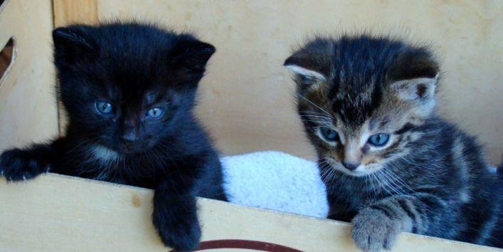 Petits chats qui vont grandir aux chambres d'hôtes de Margaridou