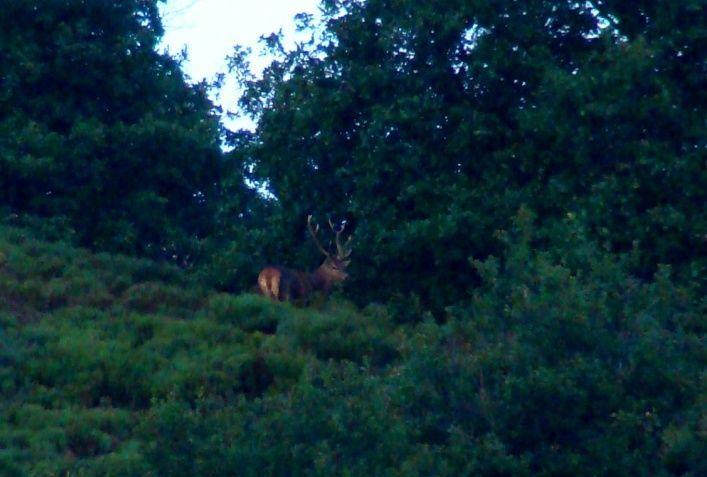 Ecoute du Brame du cerf en Auvergne et observation des cerfs