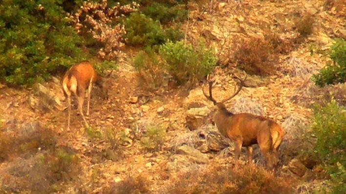 Séjours à la découverte et à l'écoute du brame du cerf en Auvergne