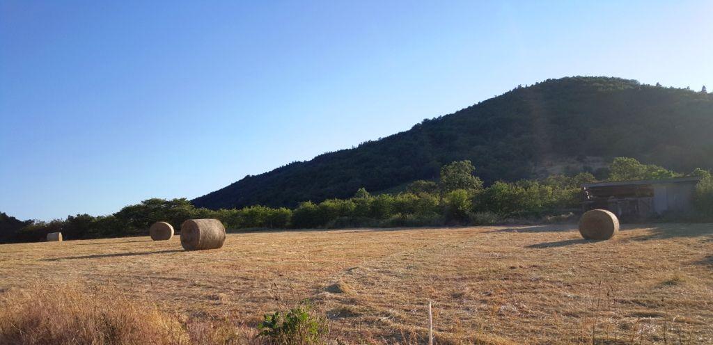 les foins dans les prairies d'Auvergne